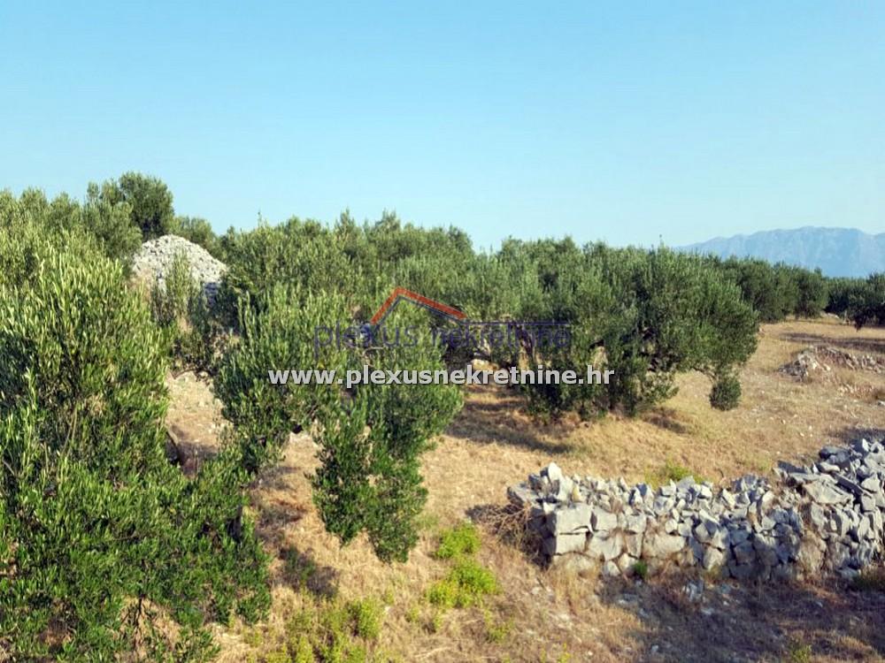 poljoprivredno zemljište maslinik brač povlja